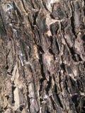 bark Foto de Stock
