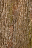 Bark 7 Royalty Free Stock Photos