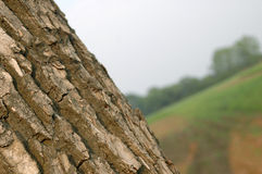 Bark. Of tree on filed royalty free stock images