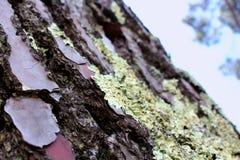 bark Fotografia de Stock