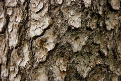 Bark Royalty Free Stock Photos