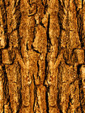 Bark A Tree An Oak A Close Up Stock Photo