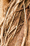 Bark abstract -2 Royalty Free Stock Photos