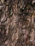 Bark abstract background stock image