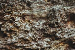 Bark abstraction Stock Photos