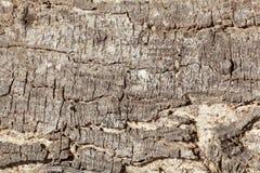 The bark of an acacia tree Royalty Free Stock Photography