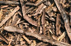 The bark of acacia trees, left after cleaning the tree trunks, scattered on the ground royalty free stock image
