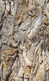 Bark on an ancient cottonwood tree. Along the High Line canal on a warm Spring day stock photos