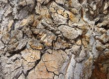 Bark on an ancient cottonwood tree. On a warm Spring day on the High Line canal royalty free stock photography