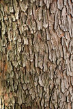 Bark of Arbutus unedo Stock Photos