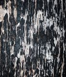 Bark as background or texture royalty free stock photography