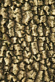 Bark of asia Royalty Free Stock Images