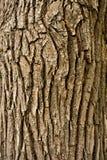 Bark background Royalty Free Stock Image