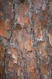 Bark Background Stock Image