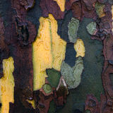 Bark background Royalty Free Stock Photography