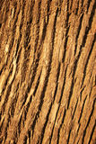 Bark background. Stock Photography