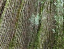 Bark background Stock Photo