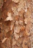 Bark background Stock Image