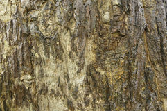 Bark background in cloundy day Royalty Free Stock Images