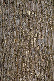 Bark background Stock Images