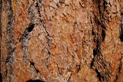 Bark background. Pine bark texture close up Stock Photography