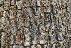 Bark background texture Royalty Free Stock Photos