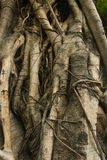 Bark. Background of bark texture detial Royalty Free Stock Photos