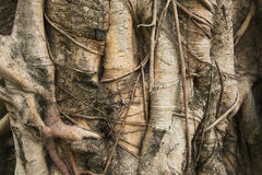 Bark. Background of bark texture detial Stock Image