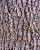 Bark background texture Stock Photography