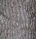 Bark Background Stock Photos