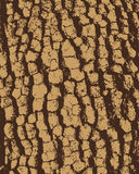 Bark background (vector) Stock Image