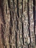 Bark background Royalty Free Stock Photo