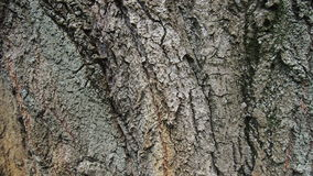 Bark for backgrounds. And textures Royalty Free Stock Image