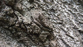 Bark for backgrounds. And textures Stock Image