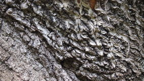 Bark for backgrounds. And textures Royalty Free Stock Photo