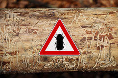 Bark-beetle attention sign Royalty Free Stock Photos
