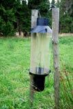 Bark beetle catcher Stock Photo