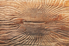 Bark beetle texture Royalty Free Stock Photos