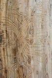 Bark beetle texture Stock Photo