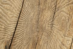 The bark beetle tunnels Stock Photography