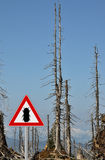 Bark beetle zone at mount Rachel Royalty Free Stock Photo