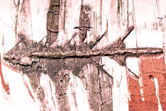 Bark on birc Stock Photo