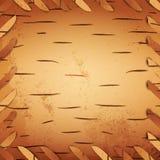 Bark birch Stock Photo