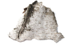 Bark of birch Royalty Free Stock Photo