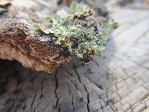 Bark, birch bark, birch, wood texture, elm, birch firewood, logs, mossy bark, patterns on the bark Stock Photography