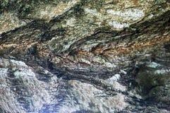 The bark of the birch macro background Stock Photos