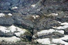 The bark of the birch macro background Stock Image