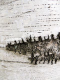 Bark of birch Stock Image