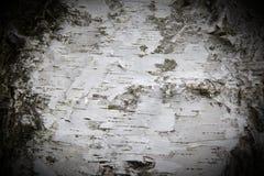 Bark of a birch tree Stock Image