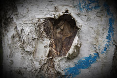 Bark of a birch tree Royalty Free Stock Images